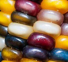 Ornamental Indian Corn Closeup by Kenneth Keifer