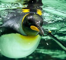 King Penguin by Ray Warren
