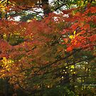 Autumn Colours - MacKenzie-King Estate by Yannik Hay