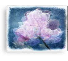 Orchid dimensions  Canvas Print