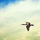 Soaring Cormorant by Christopher Burton