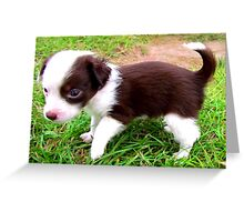small pup Greeting Card