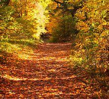Autumn Colours 3 - MacKenzie-King Estate by Yannik Hay