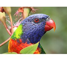 I am a pretty bird ! Photographic Print