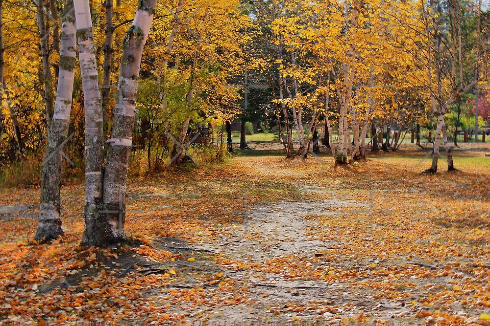 Golden Pathway by Vickie Emms