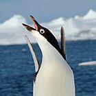 Penguin Dancing by 1113
