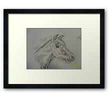 Froliking foal Framed Print