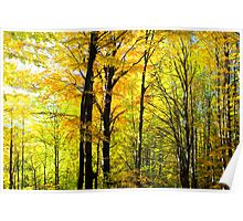 autumn paradise in forest Poster