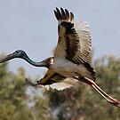 Big Bird by byronbackyard