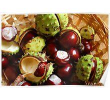Horse Chestnut Poster