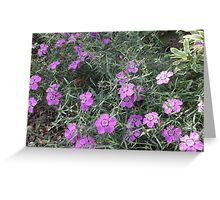 Purple Flowers in the Grass Greeting Card