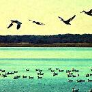 Snow Geese In Flight by Sharon Woerner
