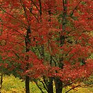 Red on Yellow by Deborah  Benoit