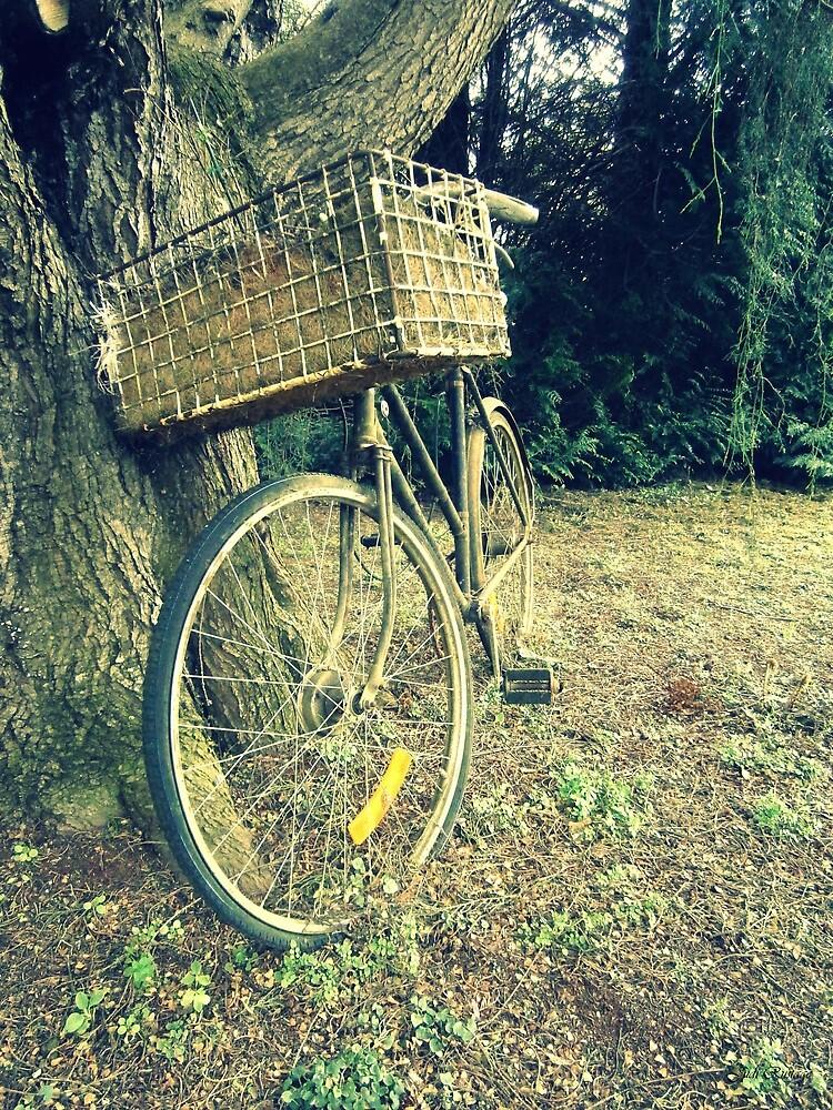 Vintage Bicycle by Judi Rustage