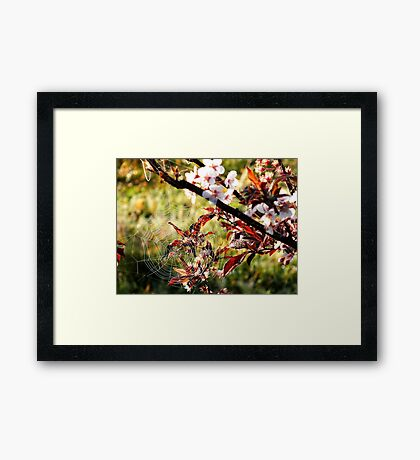 Orchard web Framed Print