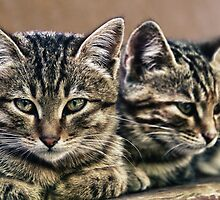 mother and child wild cats by stelio
