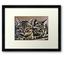 mother and child wild cats Framed Print
