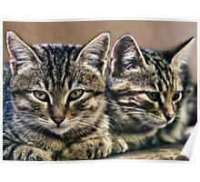 mother and child wild cats Poster