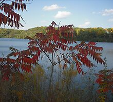Fall Day at the River by AJBPhotography