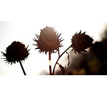 Dying plant Photographic Print