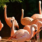Flamingos by bobbykim666