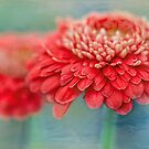 late summer flourish by Teresa Pople
