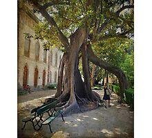 Jardim Botânico de Lisboa Photographic Print