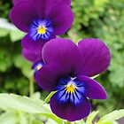 The Pansy Twins by AH64D