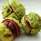 Birth of Conkers by karina5