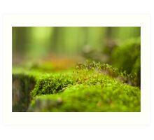 Green moss close-up Art Print