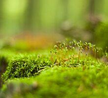 Green moss close-up by Magdalena Warmuz-Dent