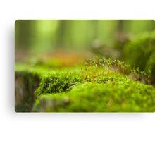 Green moss close-up Canvas Print