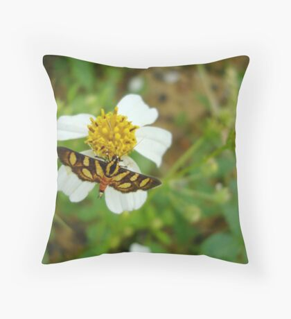 Syngamia florella:  A  DAY FLYING MICROMOTH Throw Pillow