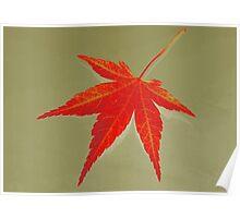 Autumn leaf fine art Poster