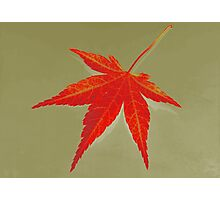 Autumn leaf fine art Photographic Print