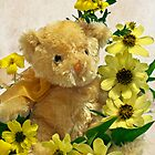 Teddy Bear - Yellow Toto Lemon Rudbeckia by Sandra Foster