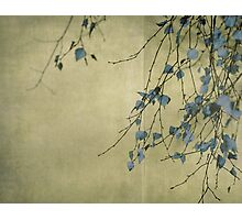 Nature's ink Photographic Print