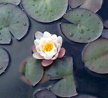 images for meditation by suriya