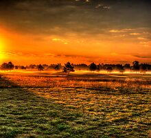 Morning Arrives At Foxfire  by Thomas Young