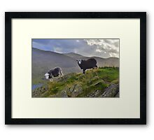 The Lake District: Life on the Edge Framed Print