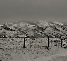 White Pasture  by schesnut