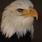 Bald Eagle  by Daisy-May
