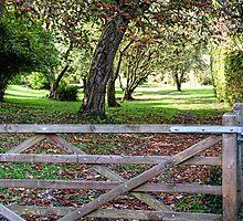 Autumn Beckons - Lyme Dorset by lynn carter