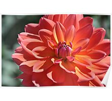 Last Flower Of Summer  Poster