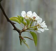Celebrating Spring by M. Kuypers