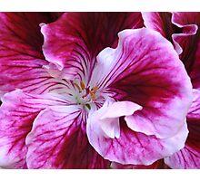 Raspberry  and cream Photographic Print