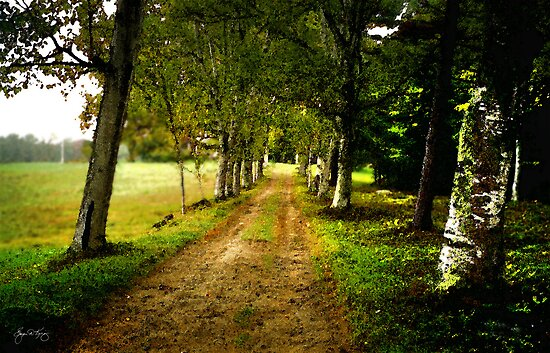 The Long Driveway Sandwich New Hampshire by Wayne King