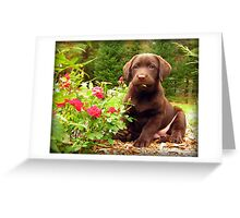 Jasper!  Stop eating the Roses! Greeting Card