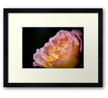 Flowerscapes - Rose Detail Framed Print