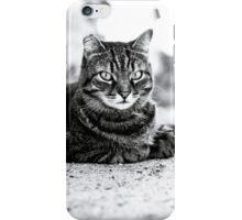 Cat the focus iPhone Case/Skin